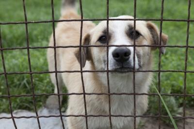 Animal Rights Essay